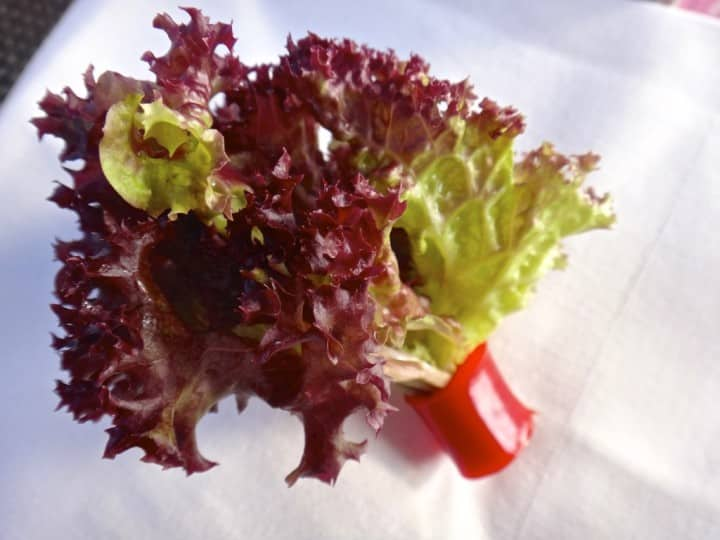 lettuce garnish
