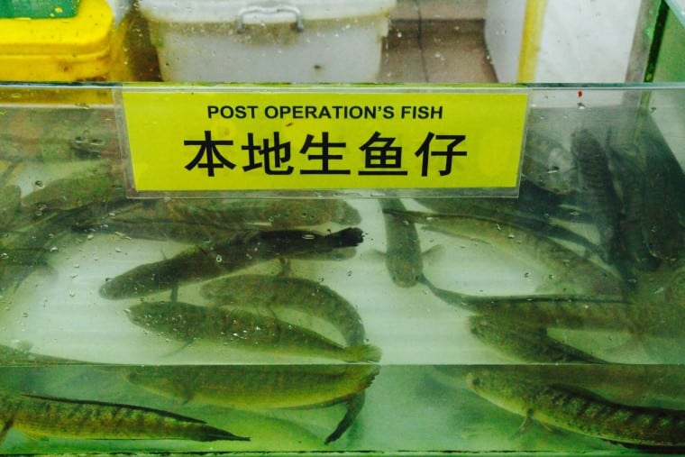 Memoirs of wet markets and eels